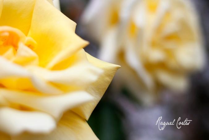 The petal