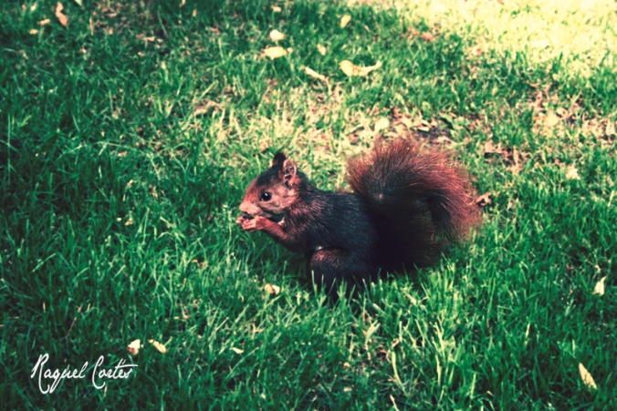 The hungry squirrel