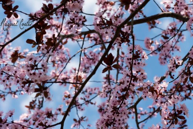 A través de las ramas y las flores está el cielo