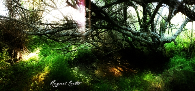 raquelcortes_witches.jpg